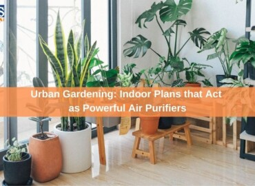 Urban Gardening: Indoor Plans that Act as Powerful Air Purifiers